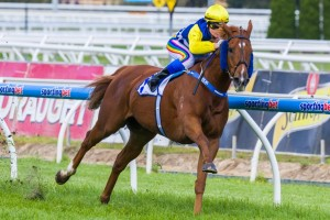 Trainer Andrew Noblet has revealed the Sir Rupert Clarke Stakes will figure as the major target for Sistine Demon this time in