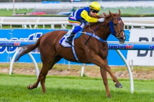 Sistine Demon will contest Saturday's Group 1 Oakleigh Plate first-up. Photo: Race Horse Photos Australia