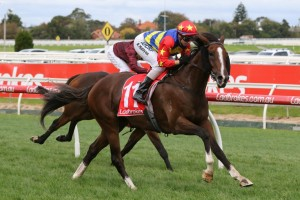 Odeon is the early favourite for Saturday's Group 1 SA Australian Derby at Morphettville. Photo: Ultimate Racing Photos