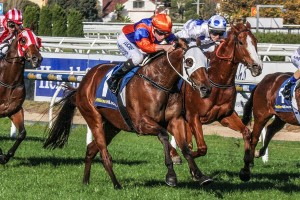 Red Bomber is one of three for David Hayes and Tom Dabernig in the 2016 Victoria Handicap field. Photo: Adrienne Bicknell