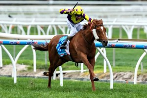 Group One Winner Sonntag Heads to Eclipse Stakes 2014