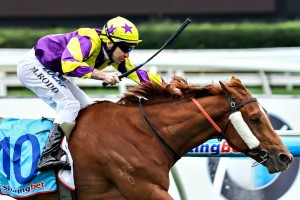 Sonntag will step up to two miles in Saturday's Listed Andrew Ramsden Stakes at Flemington. Photo: Race Horse Photos Australia