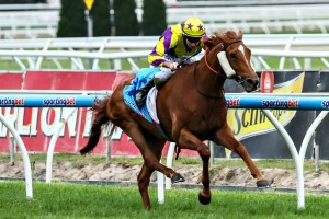 Sonntag will target the Sydney Cup upon returning to racing in 2015. Photo: Steve Hart