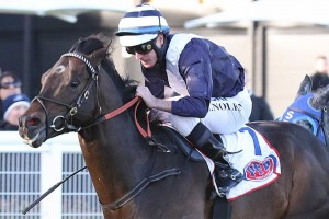 Monash Stakes winner Supido, above, will chase a Group 1 win over the Spring Carnival. Photo by Ultimate Racing Photos.