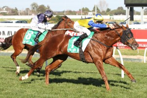 Mr Individual may target a race like the Group 1 Toorak Handicap during the forthcoming 2016 Spring Carnival. Photo: Ultimate Racing Photos