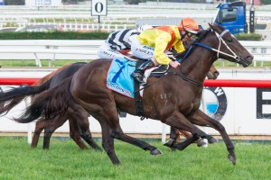 Straturbo will take on Ready To Rip (pictured) in the Moonee Valley Handicap this Saturday.