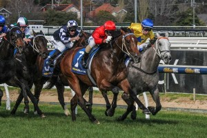 Top Me Up is primed for success in Saturday's Group 3 McNeil Stakes at Caulfield. Photo: Adrienne Bicknell
