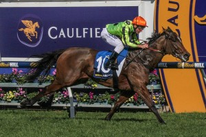 Vezalay may return to racing in the 2016 Oakleigh Plate at Caulfield on February 27th. Photo: Adrienne Bicknell