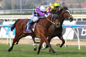 Bagman is one of eight Chris Waller-trained runners included in 2015 Hawkesbury Gold Cup nominations. Photo: Race Horse Photos Australia