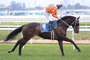 The Peter Young Stakes will be D-Day for Star Rolling when it comes to his ability to race at the highest level.