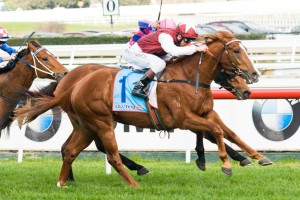 Safeguard has been confirmed in the final field for the 2014 Gold Coast Guineas