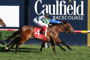 Jukebox timed his run to perfection to win the Vain Stakes at Caulfield this afternoon. Photo by: Ultimate Racing Photos