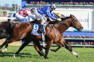 Chivalry has been included in first acceptances for the 2014 Caulfield Guineas