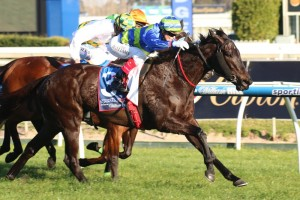 Co-trainer Tom Dabernig is thrilled with the condition of Gregers ahead of The Goodwood. Photo: Race Horse Photos Australia