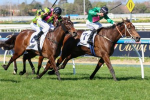 Suavito (outside) is the current favourite for the 2014 Eliza Parks International Stakes.