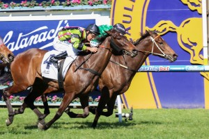 Suavito (outside) is favourite for the 2014 Ladies Day Vase.