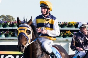 Ibicenco is likely to just sneak into the 2013 Melbourne Cup field.