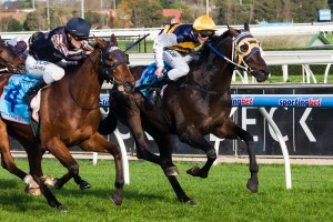Ibicenco is one of four emergencies that has missed out on a run in the 2013 Caulfield Cup.