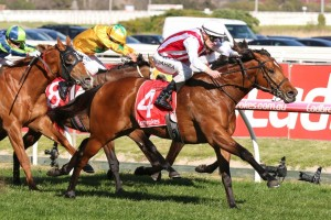 Super Seth, above, too strong for stablemate King Of Hastings to win the H.D.F. McNeil Stakes at Caulfield. Photo by Ultimate Racing Photos.