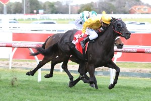 Savanna Amour scored another black-type win in the Ladbrokes Cockram Stakes. Photo by: Ultimate Racing Photos