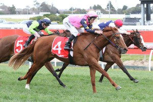 Watchmespin finished over the top of her rivals to win the opener on Memsie Stakes Day. Photo by: Ultimate Racing Photos