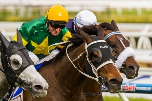 Foreteller is a leading chance for success in Saturday's Group 1 Doomben Cup. Photo: Race Horse Photos Australia