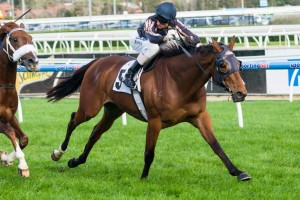 Mr O'Ceirin will return to the races in the 2014 Victoria Handicap at Caulfield on Saturday.