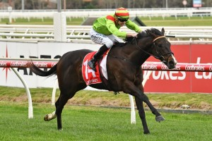 Begood Toya Mother, above, will be aiming to win back to back Sir Rupert Clarke Stakes at Caulfield. Photo by Ultimate Racing Photos.