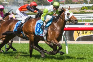 Alister Clark Stakes 2013 Tips – Moonee Valley Betting