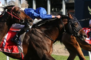 Jungle Cat, above in royal blue colours, scores a narrow win in the 2018 Sir Rupert Clarke Stakes at Caulfield. Photo by Ultimate Racing Photos.