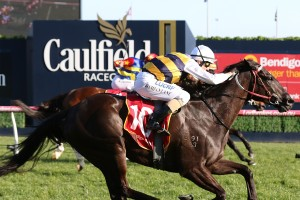 Night's Watch, above, is at double figure odds for the 2018 Caulfield Cup at Caulfield. Photo by Ultimate Racing Photos.