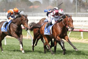 Cliff's Edge showed what he is capable of with a nice win at Caulfield this afternoon. Photo by: Ultimate Racing Photos