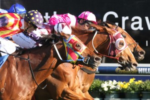 Stratum Star (centre, maroon blinkers), pipped Stratum Star and Under The Louvre on the line in the 2015 Sir Rupert Clarke Stakes. Photo: Ultimate Racing Photos