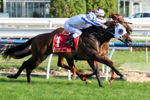 Dissident is the firm favourite to win the CF Orr Stakes on his return to Caulfield on Saturday.