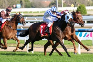 Dissident is currently available at generous odds for success in the 2015 Doncaster Mile. Photo: Race Horse Photos Australia