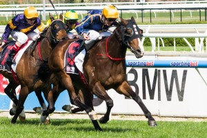 Bass Strait is a leading chance for success in Saturday's 2015 Hyperion Stakes at Belmont. Photo: Race Horse Photos Australia