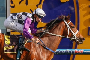 Hoop Hugh Bowman (pictured here on Amicus) will ride the 2014 Maribyrnong Plate favourite Bantam.