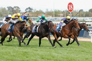 Big Memory (inside) won the 2014 Herbert Power Stakes from Signoff (centre) and Let's Make Adeal (outside). Source: Race Horse Photos Australia.