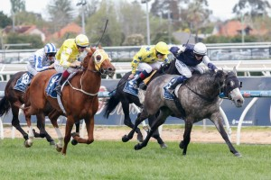 Fawkner, Criterion and Side Glance will all clash in the 2014 Cox Plate at Moonee Valley on Saturday.