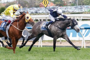 Fawkner has been scratched from the 2015 Memsie Stakes field. Photo: Race Horse Photos Australia