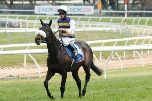 Renew is a leading chance for success in the 2014 Sandown Cup. Photo: Race Horse Photos Australia
