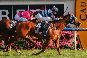Shooting To Win will be partnered by Blake Shinn in the 2015 Hobartville Stakes. Photo: Race Horse Photos Australia