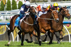 Sea Moon is a leading chance for success in the 2014 Bart Cummings