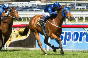 Buffering is in prime condition ahead of the 2014 T.J. Smith Stakes this weekend