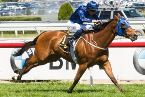 Buffering has returned to the spelling paddock and will not contest the 2014 Stradbroke Handicap