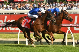 Jockey Pat Cosgrave, above in all blue colours winning the Ladbrokes Stakes on Benbatl, will ride Best Solution in the 2018 Caulfield Cup at Caulfield. Photo by Ultimate Racing Photos.