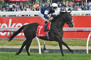 Yucatan, above, is Ladbrokes' Peter Moody's top 2018 Melbourne Cup tip. Photo by Ultimate Racing Photos.