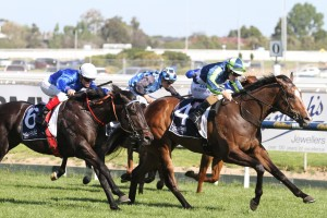 Keen Array was too strong for his rivals in the 2015 Blue Sapphire Stakes. Photo by: Ultimate Racing Photos