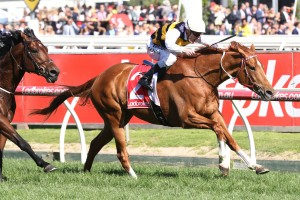 Johannes Vermeer ran second to Gailo Chop, above, in the Ladbrokes Stakes at Caulfield. Photo by Ultimate Racing Photos.