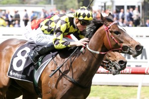 Jennifer Lynn, above, is chasing her fourth win on the trot in the Ladbrokes Sandown Guineas at Sandown. Photo by Ultimate Racing Photos.